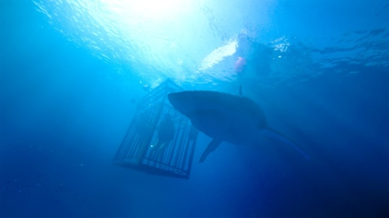 Images from 47 METERS DOWN